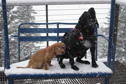 aspen animal hospital picture of two dogs on a bench